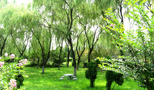 云鹤绿荫草坪